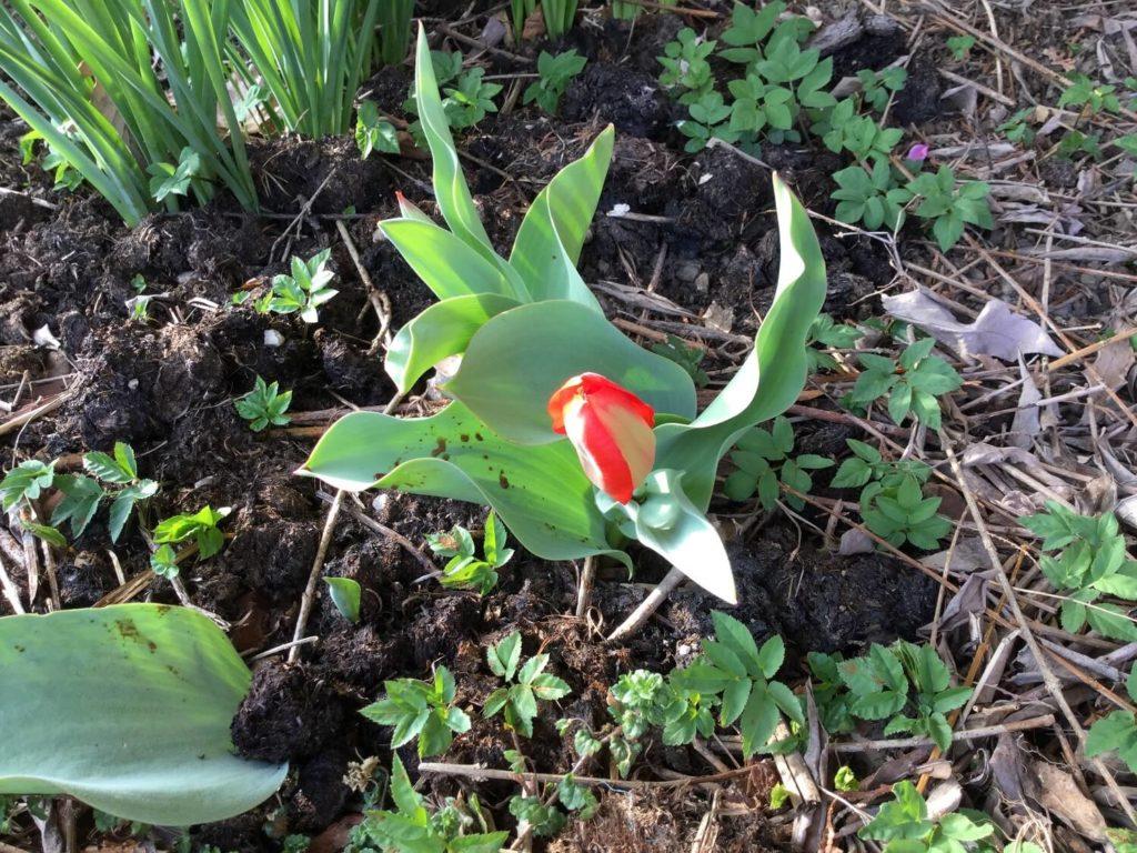 Simona Novak - pomlad na vrtu